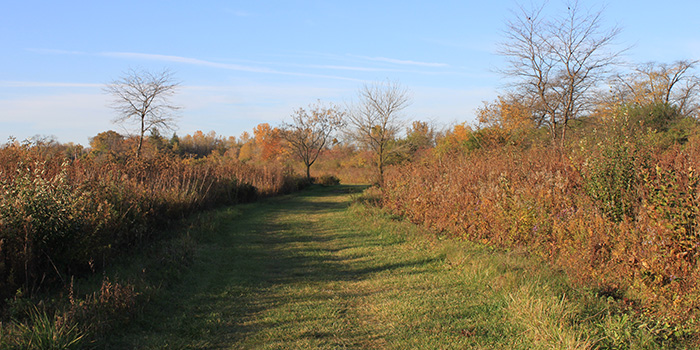 Wildwood Grasslands Trail