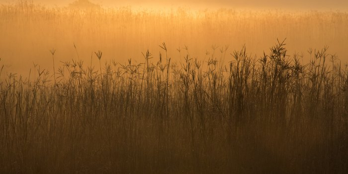 blue-creek-tallgrass-prairie-sunrise-117jpg