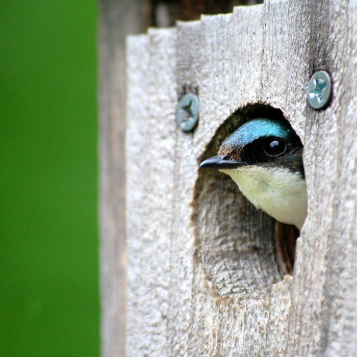 Metroparks Is Adding 20 New Cavity Nesting Bird Bo And A Bat Condo To Provide Habitat For Several Important Species
