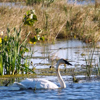 Bicycling, Birding, Hunting Now at Howard Marsh