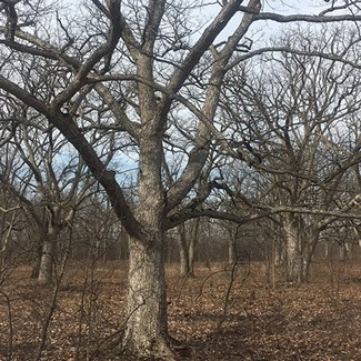 'Pigeon Trees' Among Rare Finds at Limestone Glade