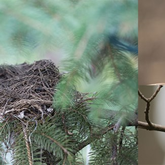 Empty Nests? Look Again!